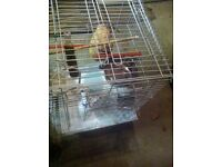 Parrot cage supplier wanted for business !