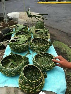 Fresh Hawaiian Hand Woven Coconut Palm Frond Baskets