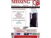 Cat missing in paisley area