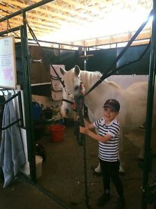 A great back to school activity, English Riding lessons