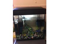 Tropical fish tank with fish complete set up
