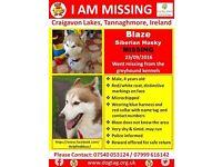 BLAZE IS STILL MISSING!!!!