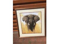 David Shepard Rhino & Elephant prints