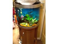 Large bow fronted aquarium with storage unit stand,all filtration,plants,fish etc,only £60,