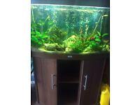 3ft Jewel Fish Tank with Community Fish