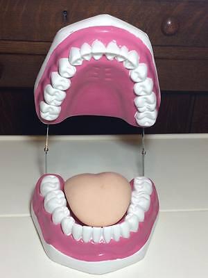 Large Denture Model Teaching Assistant