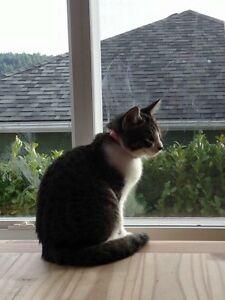 Wonderful 8 month female kitten for adoption