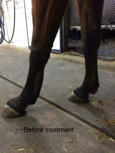 Performance Horse Laser Therapy