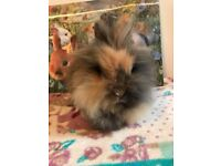 RABBITS AVAILABLE FOR NEW HOMES
