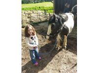 Loveable pony