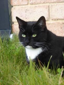 AC0196: Katia - CAT for ADOPTION - Vet Work Included