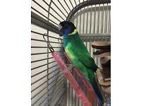 Birds/Parrots