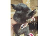 2 young beautiful female rabbits & cage (STILL AVAILABLE)