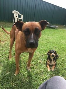 My babies might need a home Muswellbrook Muswellbrook Area Preview
