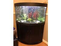 Juwel trigon 190 aquarium with all fish and extras!