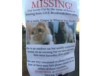 Missing Cat.