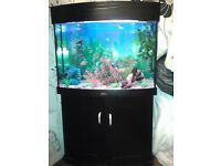 Tropical fish tank *QUICK SALE £10*