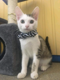 Ron 5 month old kitten looking for love