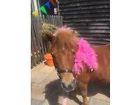 Pinky the party Pony available for Birthdays Parties etc