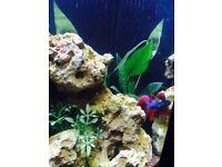 Aqua One 22L Fish Tank