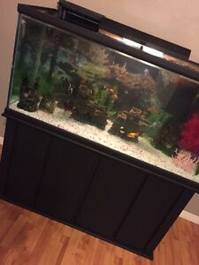 75 gallon fish tank everything new and included