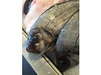 Fishmonger / Butcher