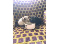 2 Male Guinea Pigs, Cage & Accessories £80 Bexleyheath DA6