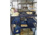 Two Male Chinchillas Plus Large Cage For Sale