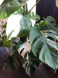 House plants and cuttings