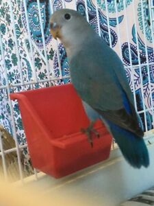 Love bird & nudge to loving Home