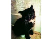 3 Little kittens for sale