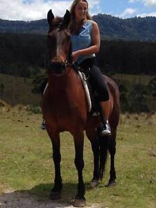Standard bred Mare with bridle & rugs etc.  NO DOGGERS Woodenbong Tenterfield Area Preview