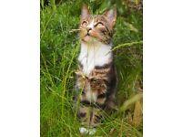 Cat Sitter, Pet Sitter in Islington, London