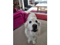 Pet sitter/dog walker/cat visits Cornwall & Devon