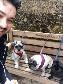 Reliable and friendly Dog Walker pet sitting