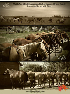 Experienced Wellness Program Horses - Mable Elliott Guest Ranch