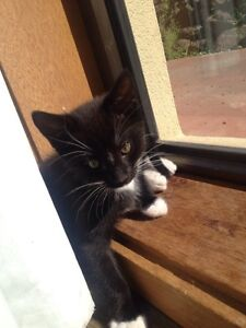 Kittens FREE to good home Traralgon Latrobe Valley Preview