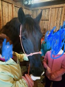 7 y/o 15.3hh QH/Paint horse