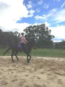 Young Horse Ready to Train Leongatha South South Gippsland Preview