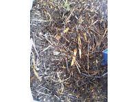 wood chip / wood mulch