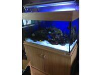 Beta Lifespace Fish Tank 4 x 2 x 2 - £400
