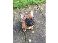 One Bed flat wanted for professional man with his little dog in central Exeter.