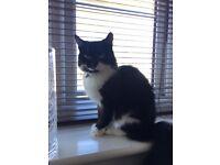 Found Black Cat Armley