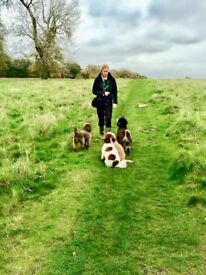 Part time dog walker needed for Shepperton and local area