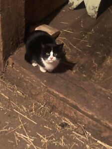 Barn cats to give away