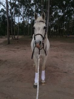 Grey Mare for sale to approved home only Jimboomba Logan Area Preview