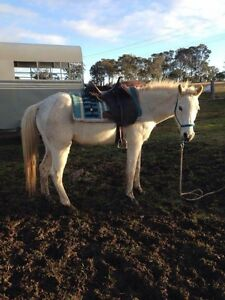 Quiet gelding Appin Wollondilly Area Preview