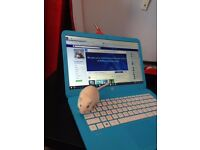 Cute Gerbil looking for a forever home