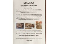 Lost Thai Lilac Cat. Northam, Southampton