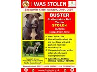 BUSTER VANISHED FROM DERBY 3/6/16